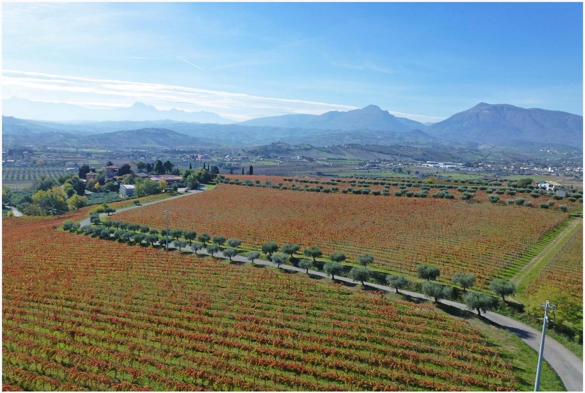 Riprese-aeree-professionali-per-aziende-vinicole-Riprese-aeree-con-droni-Foto-aeree-Giulianova-Teramo-ed-Abruzzo